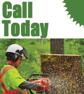 Cedar Grove Tree Service Contact Info