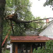 Cedar Grove Tree Service 24hr Emergency Call-out