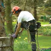 Cedar Grove Tree Service Professionalism