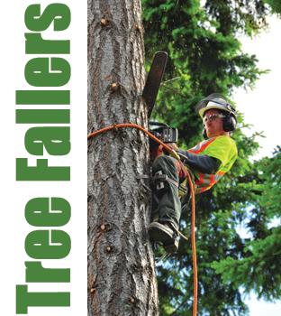 Cedar Grove Tree Service Tree Fallers