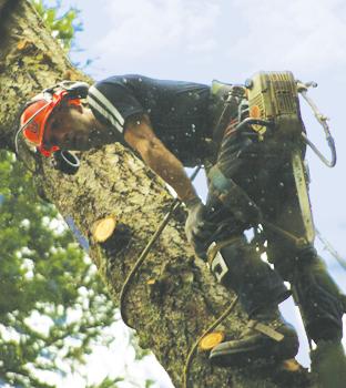Cedar Grove Tree Service Kamil Khan Professional Tree Faller