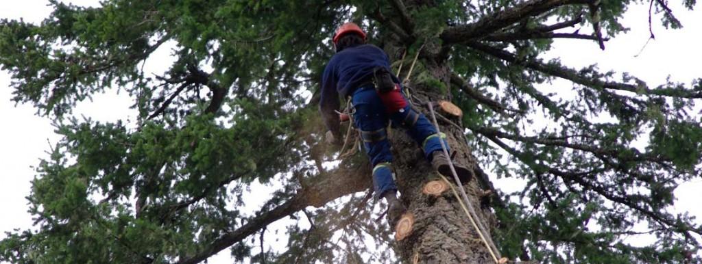 Cedar Grove Tree Service Victoria Duncan Nanaimo BC